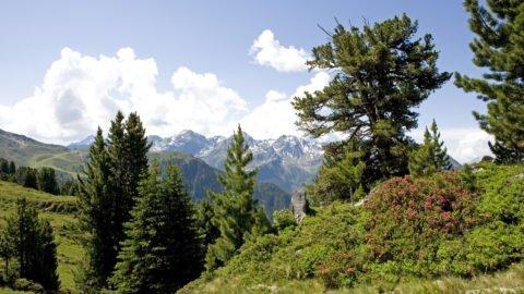 Berglandschaft im Pitztal Tirol