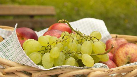 sommer fruehstueck sumpfhuette11