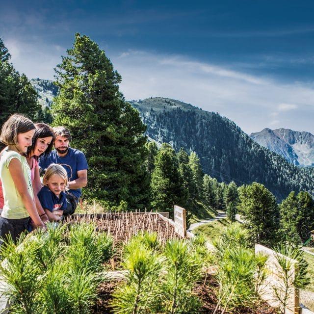 familie sommer zirbenpark hochzeiger